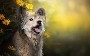 Wallpaper face, flowers, dog, bokeh