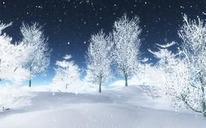 Picture winter, snow, trees, white, landscape, winter, snow, tree