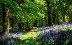 Picture forest, the sun, flowers, spring, path