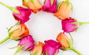 Picture flowers, roses, yellow, pink, buds, yellow, pink, flowers, romantic, roses, cute