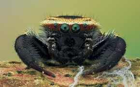 Picture macro, background, spider, hairs, insect