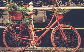 Picture flowers, red, style, rusty, Europe, Bike