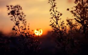 Picture The sun, Field, Dawn, Light, Landscape, Sun, Dawn, Golden, Blur, Flora, Backlit, Field Flower, by …