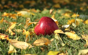 Picture photo, Nature, Autumn, Apple, Grass Leaves