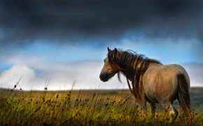 Picture summer, nature, horse