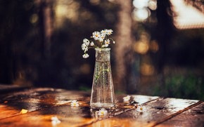 Picture on the table, flowers in a vase, blur bokeh