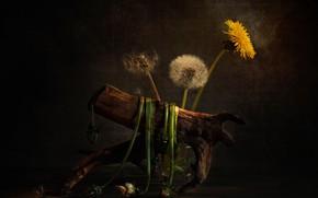 Picture snag, still life, dandelions