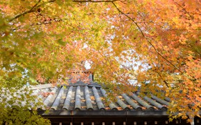 Picture roof, autumn, trees, yellow leaves