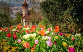 Picture landscape, flowers, nature, Park, castle, the building, tulips