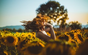 Picture field, summer, the sky, girl, clouds, light, sunflowers, flowers, nature, pose, tree, mood, hair, the …
