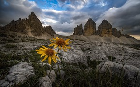Picture grass, clouds, landscape, flowers, mountains, nature, stones, Italy, The Dolomites, Roberto Aldrovandi