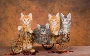 Picture wagon, wall, kitty, Milota, brown background, Maine Coon, cuties, baby, four, driver, passengers, boys, sitting, …