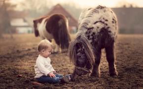 Picture nature, horse, child