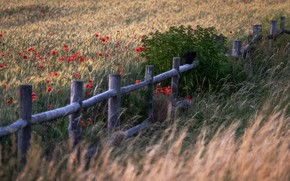 Picture field, summer, the fence