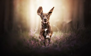 Picture nature, dog, running