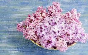 Picture flowers, wood, flowers, lilac, lilac