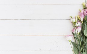 Picture white, BACKGROUND, BOUQUET, eustoma