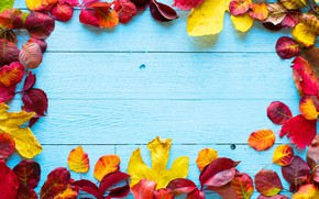 Picture autumn, leaves, background, colorful, wood, autumn, leaves