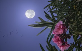 Picture flower, night, the moon, China