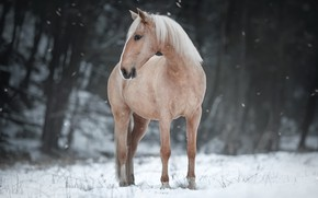 Picture winter, nature, horse