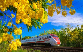 Picture flowers, train, spring