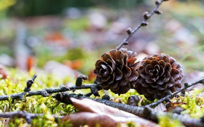 Picture nature, two, branch, a couple, bumps, bokeh