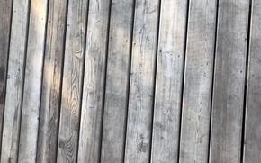 Picture tree, Board, floor, texture
