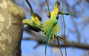 Picture pair, parrots, green