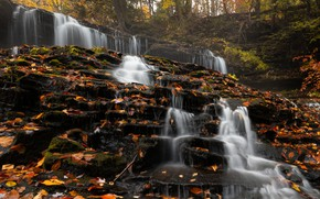 Picture forest, leaves, trees, nature, stones, waterfall, USA