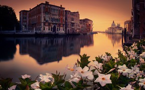 Picture flowers, the city, venecia