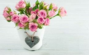 Picture roses, bouquet, pot, THE OFF