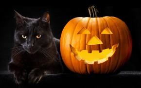 Picture cat, photo, Halloween, pumpkin