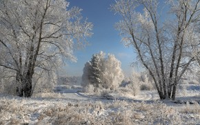 Picture winter, frost, road, snow, trees, landscape, nature, frost