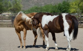 Picture pose, horses, horse, weasel, corral