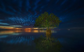 Picture clouds, tree, the evening, tide