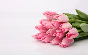 Picture flowers, bouquet, tulips, pink