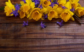 Picture flowers, yellow, yellow, wood, flowers, daffodils, spring