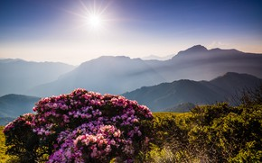 Picture the sky, the sun, rays, flowers, mountains, nature, fog, hills, beauty, spring, morning, Asia, haze, …