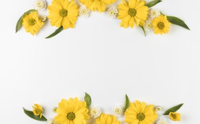 Picture flowers, background, chamomile, chrysanthemum, composition