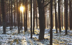 Picture The sun, Nature, Winter, Grass, Trees, Snow, Forest, Branches, Rays