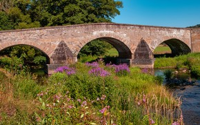 Picture greens, summer, grass, trees, flowers, bridge, thickets, shore, channel, old, arch, river, the bushes, pond, …