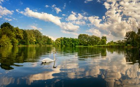 Wallpaper the sky, clouds, trees, lake, reflection, bird, Swan