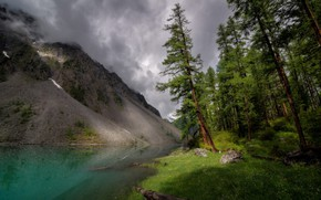 Picture forest, summer, grass, trees, mountains, lake, rocks, shore, pine, log, pond