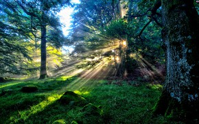 Picture dawn, the rays of the sun, in the woods