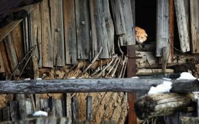 Picture cat, cat, attic, attic, Алексей Пантелеев