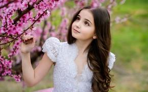 Picture look, hair, spring, girl, beautiful, flowering