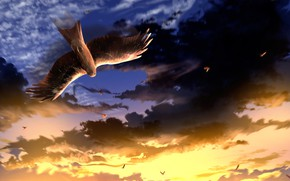 Picture the sky, sunset, bird