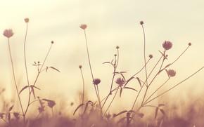 Picture Macro, Flowers, Flower, Plant, Plants, Color, Flora, Plants, Close-up, Flora, Plant, by Javier Gonzalez, Javier …
