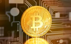 Picture coin, coin, bitcoin, bitcoin, btc