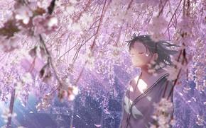 Picture Sakura, girl, tears